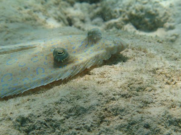 Bonaire, N.A. Underwater Photos